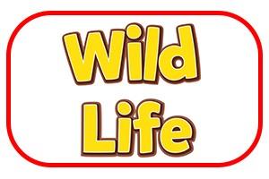media/image/schleich_wildlife.jpg